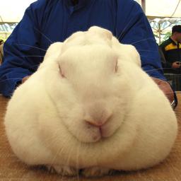 20071021_rabbit_02