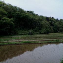 20090517_tanbo