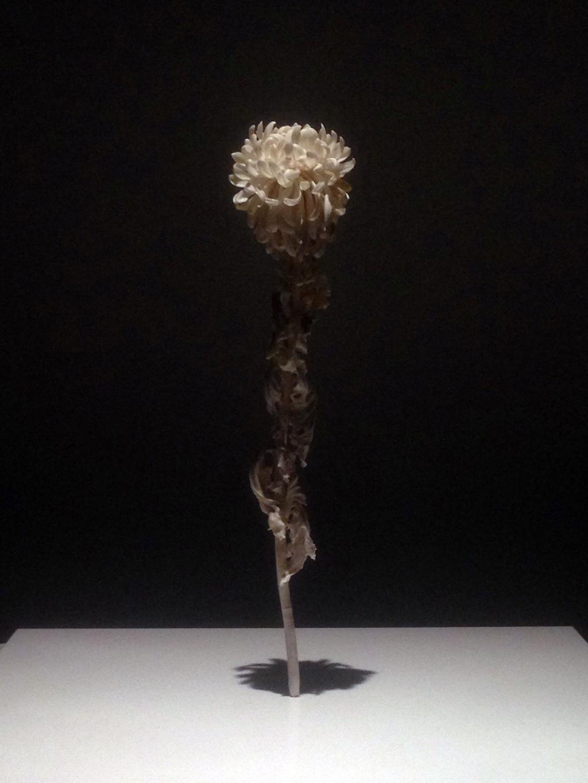 橋本雅也「一草一木」